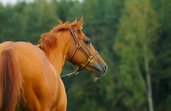 Horse nature Stock Image