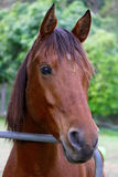 Horse. Nature  green background with horse Royalty Free Stock Image