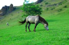 Horse in nature royalty free stock photo