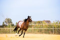 Horse on nature. Portrait of a horse, brown horse Royalty Free Stock Photos