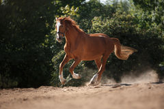 Horse on nature. Portrait of a horse, brown horse Royalty Free Stock Images