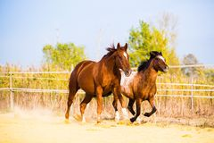 Horse on nature. Portrait of a horse, brown horse Stock Images