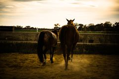 Horse on nature. Portrait of a horse, brown horse Stock Photography