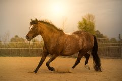 Horse on nature. Portrait of a horse, brown horse Royalty Free Stock Image