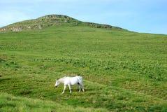 horse nature wild Arkivbild