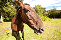 Horse in the nature Royalty Free Stock Photo