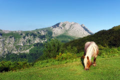 Horse near Anboto mountain Royalty Free Stock Images
