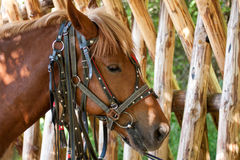 Horse near fence Stock Photography