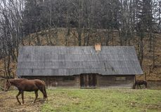 Horse near the house. In the park Shevchenko, Ukraine, Lviv Royalty Free Stock Photo