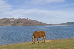 Horse near lake Royalty Free Stock Image
