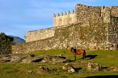Horse near Lindoso castle in National Park of Peneda Geres. Portugal royalty free stock photo