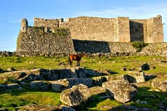 Horse near Lindoso castle in National Park of Peneda Geres. Portugal stock photo