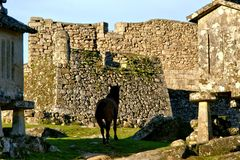 Horse near Lindoso castle in National Park of Peneda Geres. Portugal stock image