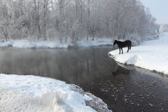 Horse near the melting river in  spring Stock Image