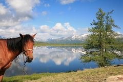 Horse near mountain lake Stock Images