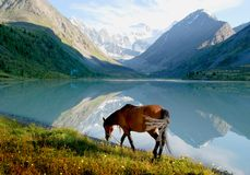 Horse near mountain lake Stock Photos