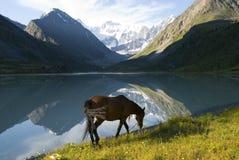 Horse near mountain lake Royalty Free Stock Photography