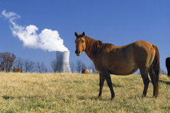 Horse near Nuclear Power Plant. Horse in a field with Callaway nuclear power plant in background, Stedman, Missouri Royalty Free Stock Photography