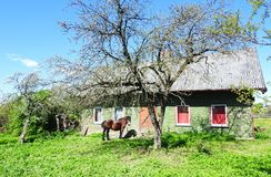 Horse near old home, Lithuania Royalty Free Stock Photo