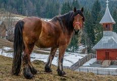 Horse near the Orthodox Church, Apuseni Mountains, Romania royalty free stock image