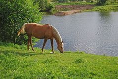 Horse near pond Royalty Free Stock Image