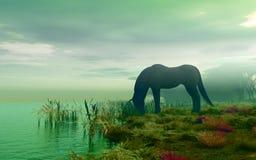 Horse near river Royalty Free Stock Photo