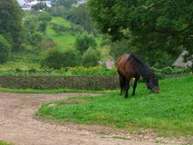 Horse near the road. Brown horse near the village road Royalty Free Stock Photography