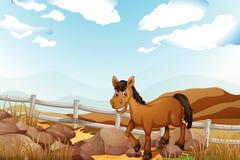 A horse near the rocks Stock Photos