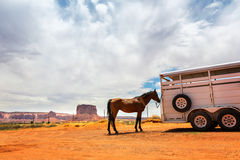 Horse near the trailer. Royalty Free Stock Photos