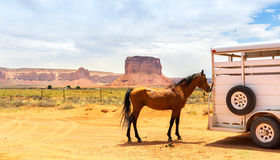 Horse near the trailer. Royalty Free Stock Image