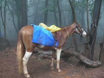Horse. Near a tree at Matheran Royalty Free Stock Photography
