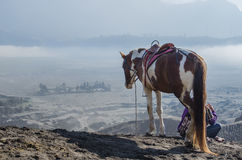 Horse near Volcano Bromo, Java, Indonesia Stock Photos