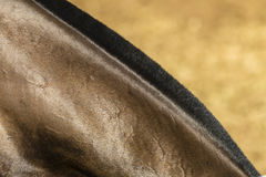 Horse Neck Detail Stock Image
