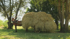 Horse neighing, Horse cart loaded with hay, horse cart stock footage