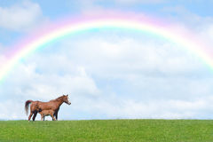 Horse and New Born Foal Royalty Free Stock Images