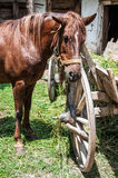 Horse next to a wooden cart Stock Images