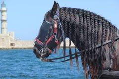 Horse I stock image