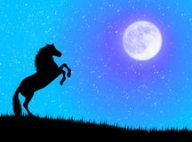 Horse in the night Stock Photos