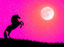 Horse in the night. Black wild horse against a moonlight night Royalty Free Stock Image