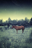 Horse at night. Royalty Free Stock Photo