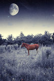 Horse at night. Stock Images
