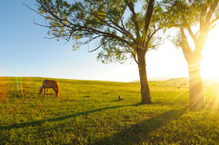 Horse in nightfall Stock Photography