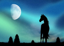 Horse and Northern Lights Royalty Free Stock Photos