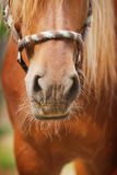 Horse nose Royalty Free Stock Photos