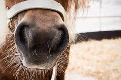 Free Horse Nose Royalty Free Stock Photos - 44378968