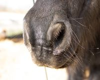 Horse nose closeup with the blurred background royalty free stock image