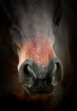 Horse nose detail Royalty Free Stock Image