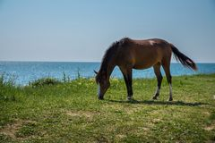 Horse  by the ocean Royalty Free Stock Photo