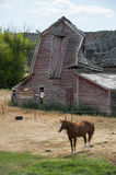 Horse and Old Barn Stock Photography