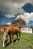 The horse and old church Stock Image